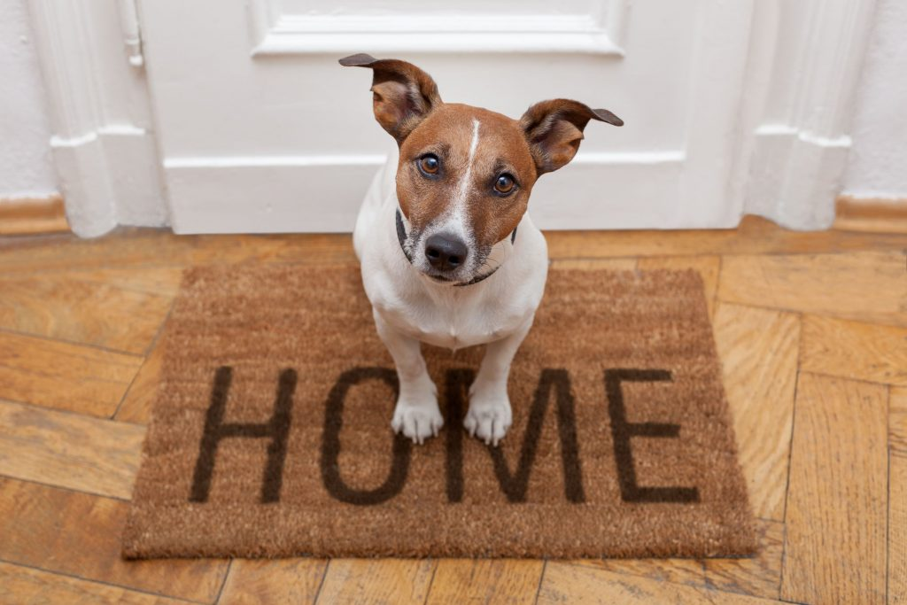 Dog -sit -on-Welcome-home-mat